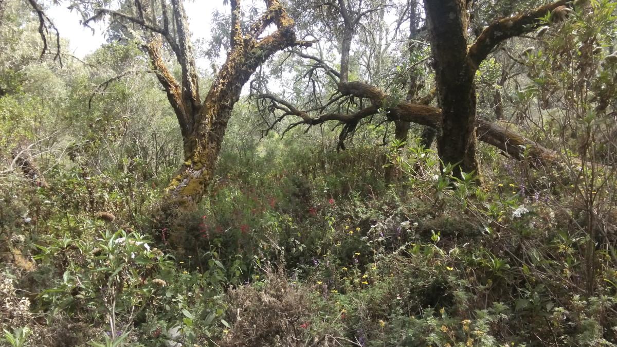 Wald soweit das Auge reicht